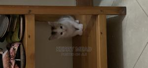 1-3 Month Female Mixed Breed American Shorthair | Cats & Kittens for sale in Kilifi, Mtwapa