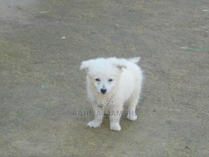1-3 Month Female Mixed Breed Pomeranian | Dogs & Puppies for sale in Kisumu, Kisumu West