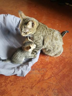 0-1 Month Female Mixed Breed Egyptian Mau | Cats & Kittens for sale in Nairobi, Kahawa