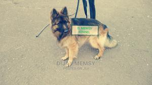 1+ Year Male Purebred German Shepherd   Dogs & Puppies for sale in Kajiado, Kitengela