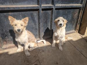 6-12 Month Female Mixed Breed Dog   Dogs & Puppies for sale in Nairobi, Nairobi Central