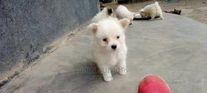 1-3 Month Female Mixed Breed Japanese Spitz | Dogs & Puppies for sale in Nairobi, Ruai