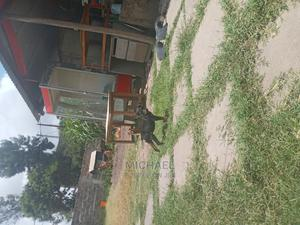 1-3 Month Female Mixed Breed Rottweiler | Dogs & Puppies for sale in Nairobi, Utawala