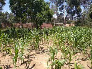 Land in Bungoma | Land & Plots For Sale for sale in Bungoma, Marakaru/Tuuti