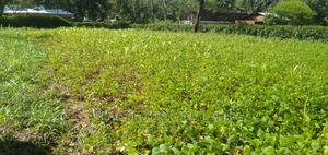 Quarter an Acre at Mabanga Bungoma | Land & Plots For Sale for sale in Bungoma, West Nalondo