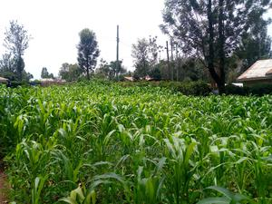A 50X100 Plot Is on Sale in Rongo Winter Area. | Land & Plots For Sale for sale in Migori, Central Kamagambo