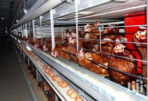 Poultry Chicken Cages,Pig Nipple Drinkers And Other Equipments. | Farm Machinery & Equipment for sale in Nairobi, Imara Daima