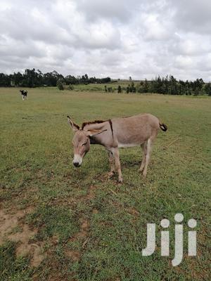 Plots for Sale | Land & Plots For Sale for sale in Laikipia Central, Ngobit