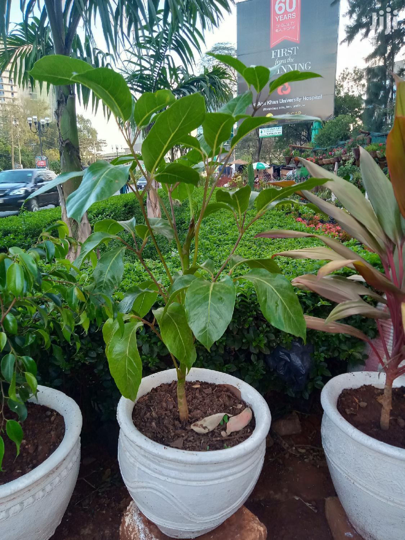 Potted Flowers   Garden for sale in Parklands/Highridge, Nairobi, Kenya