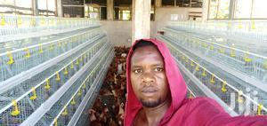 Poultry Chicken Cages | Farm Machinery & Equipment for sale in Nairobi, Kasarani
