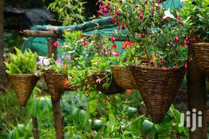 Hanging Flowers And Potted Plants   Garden for sale in Nairobi, Westlands