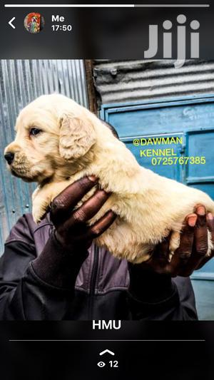 Baby Female Purebred Golden Retriever | Dogs & Puppies for sale in Nairobi, Nairobi Central