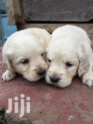 Baby Female Purebred Golden Retriever | Dogs & Puppies for sale in Mombasa, Tudor